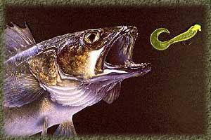 """Pike fishing techniques"""