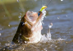 """bass fishing tips"