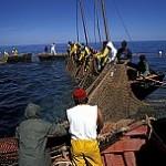 Tuna Fishing, St Pietro Island, Sardinia, Italy