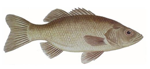 Autumn australian bass fishing tips fishing sites for Bass fishing websites