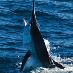 things needed for deep sea fishing