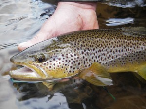 fly fishing tips 1