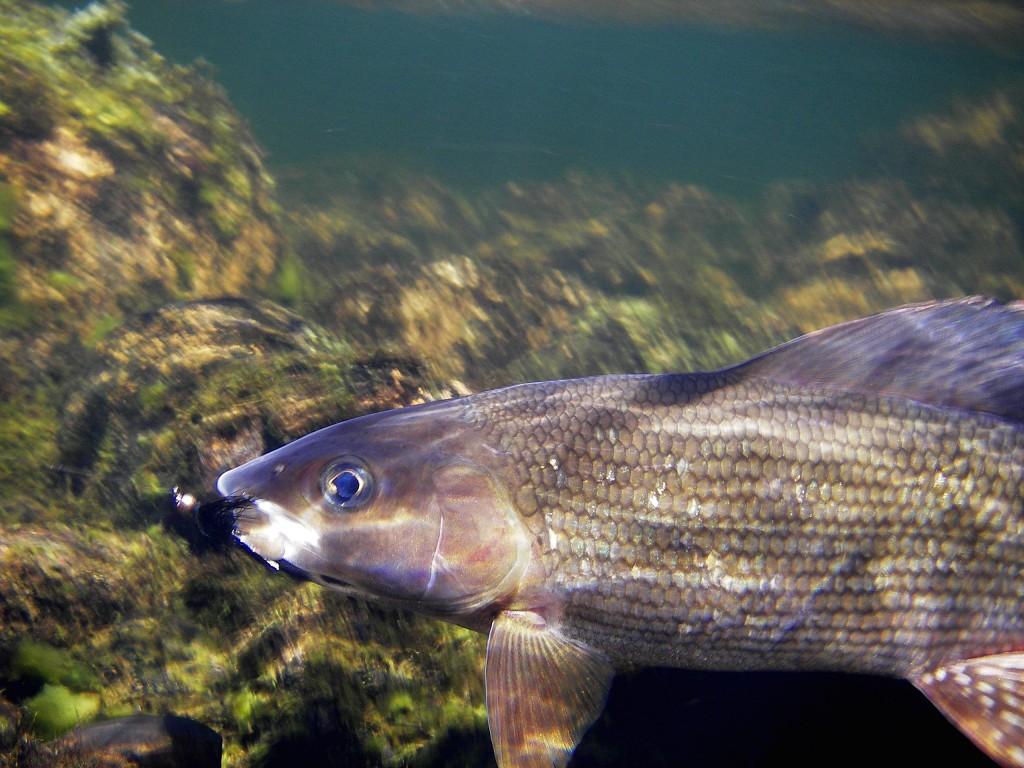 fly fishing tips 3