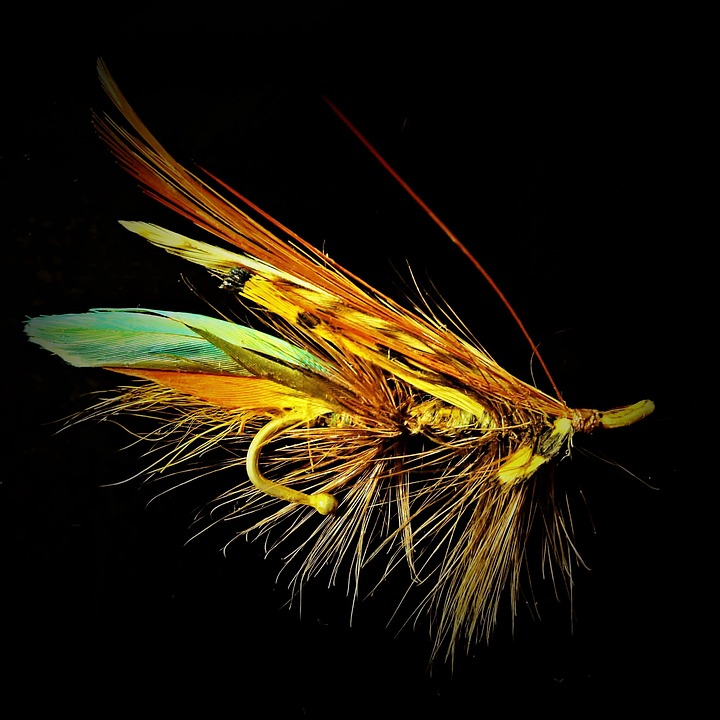 Choosing Beautiful Flies