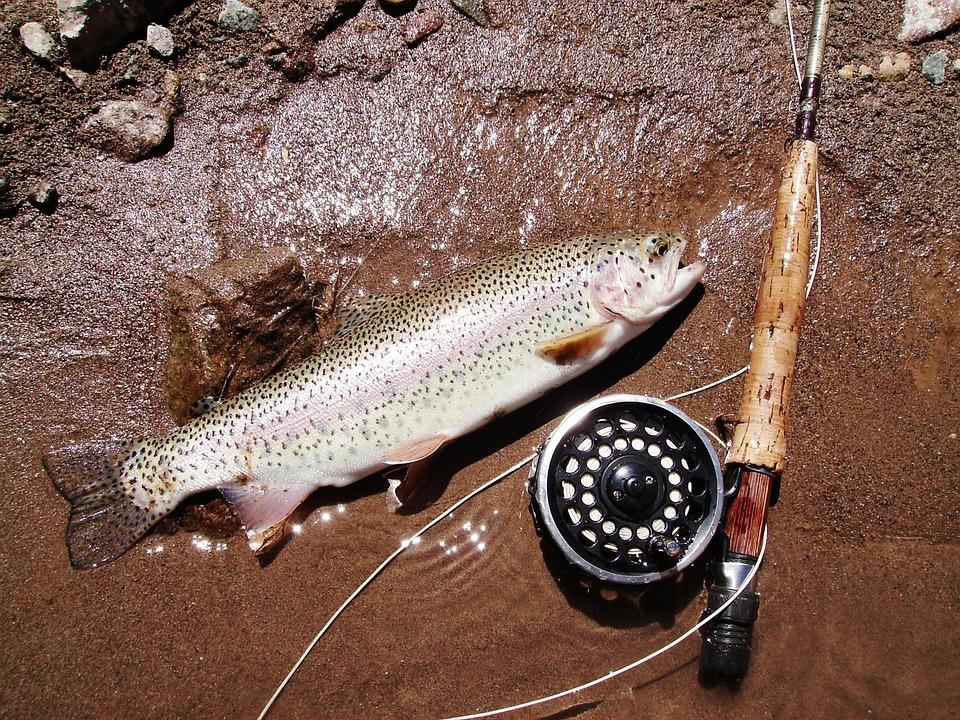 Trout Fishing in Turbid Water