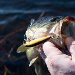 Bait Fishing Tips